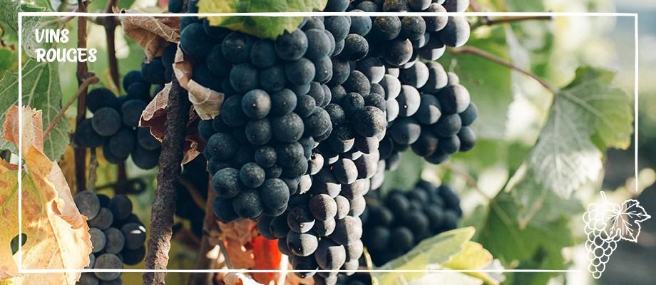 Vin - Couleur - Rouge
